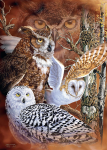 18346_Find-the-Owls-500-1